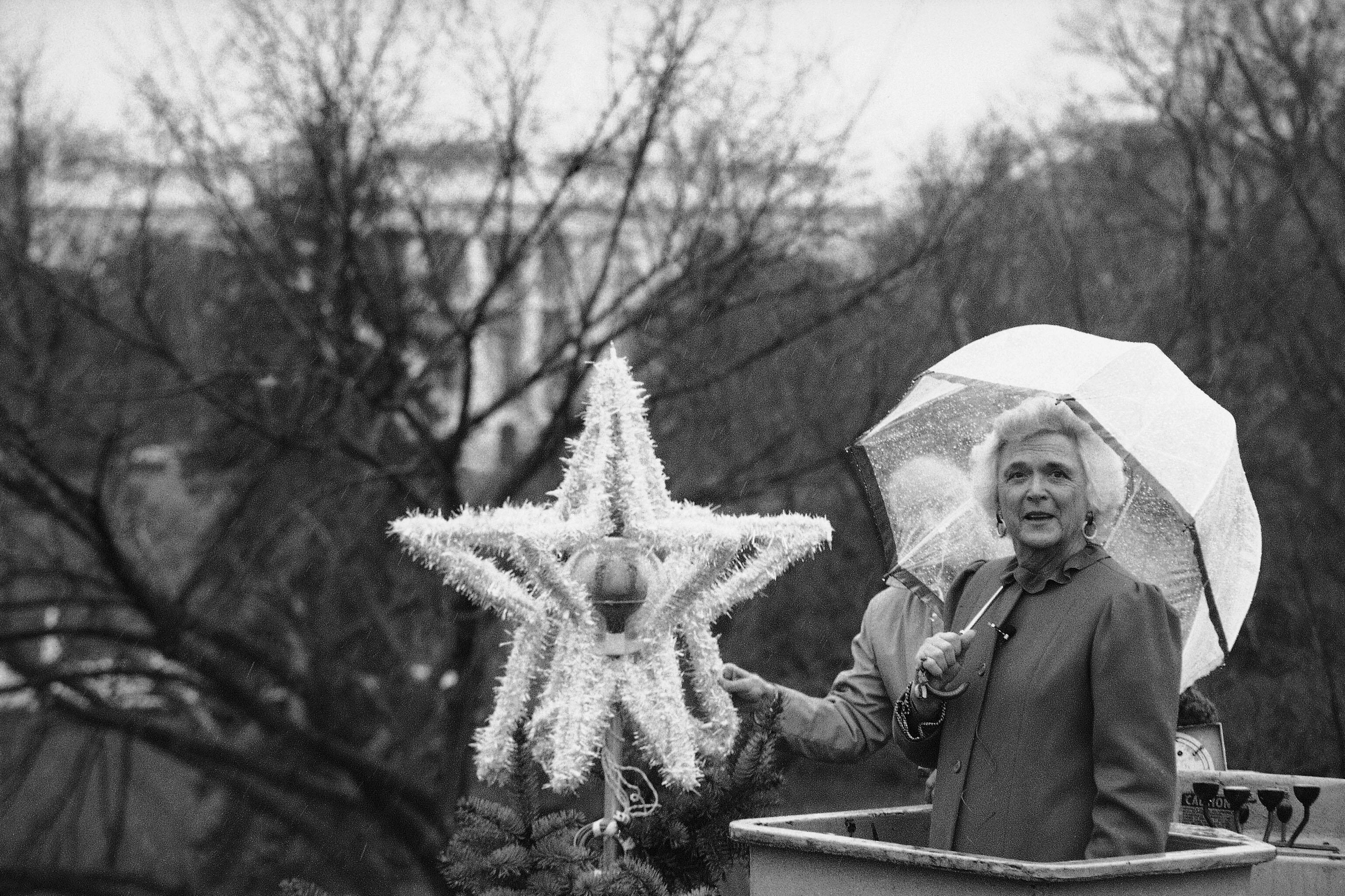 芭芭拉布什国家圣诞树