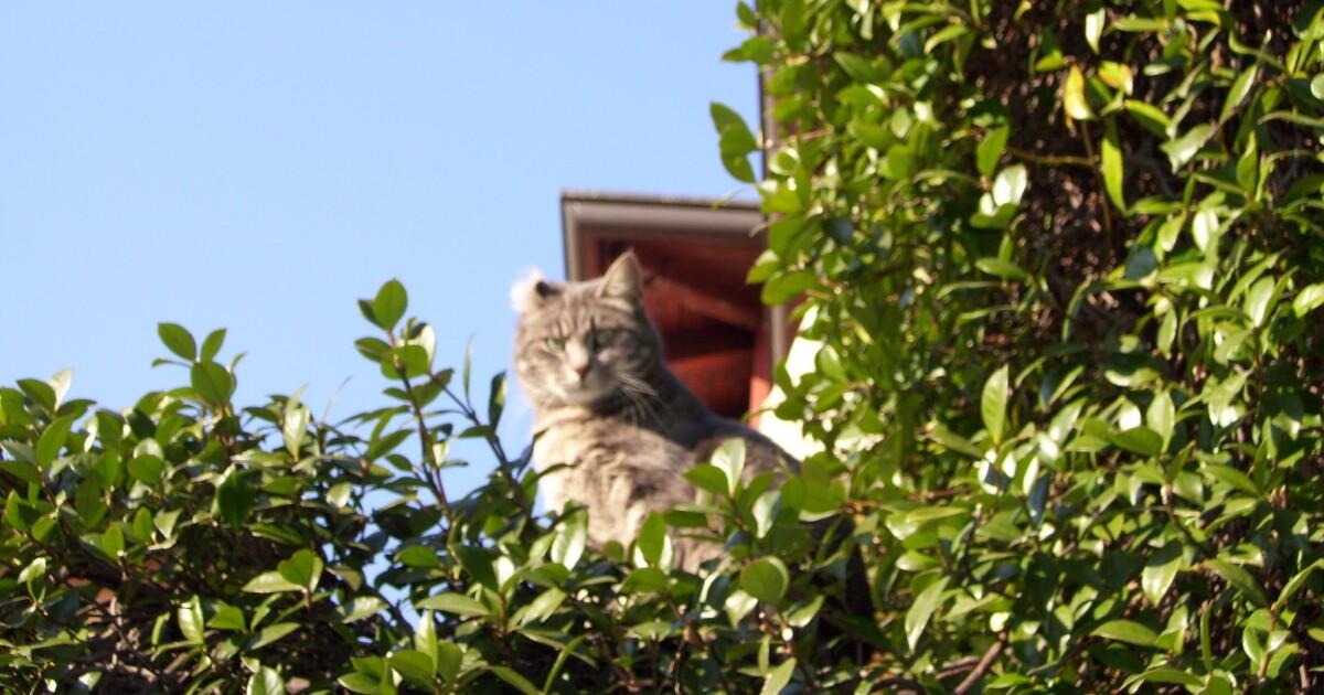 下午链接:Walmart变小,Herding D.C.的猫和一个可疑的Cuomo捐赠者