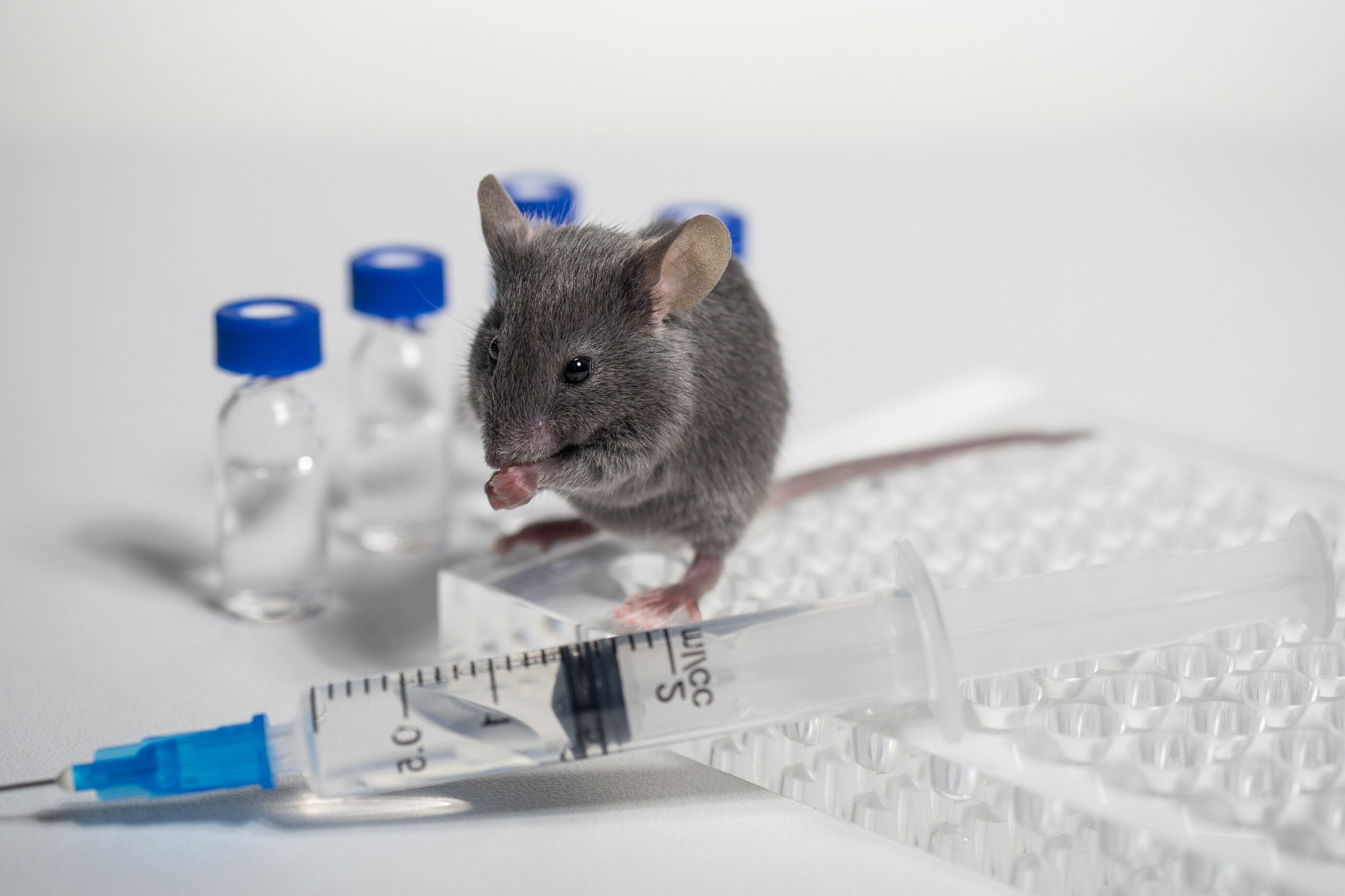 Image result for animal testing