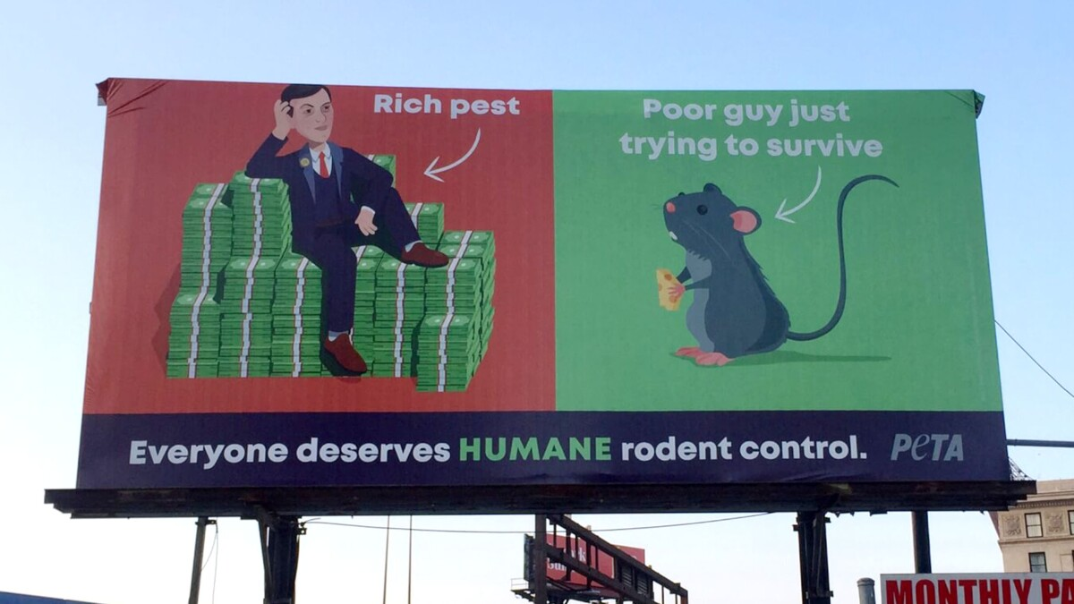 PETA billboard in Baltimore compares Kushner to rat and labels him a 'rich pest'