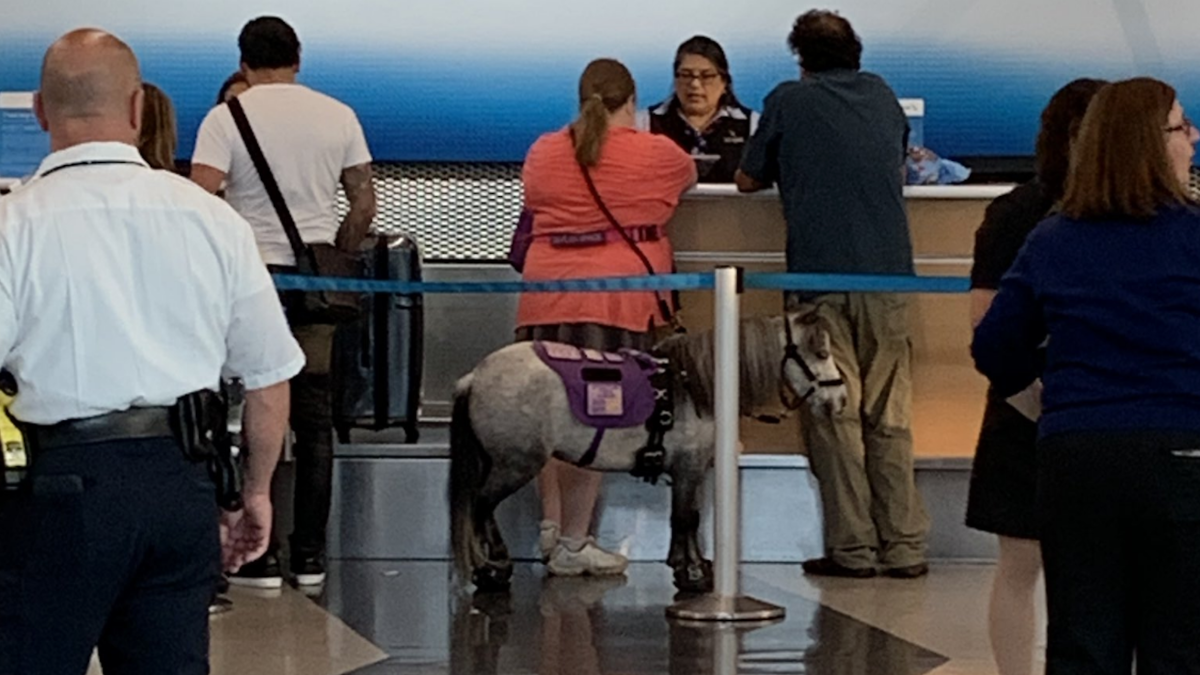 'I'm so curious': Miniature horse boards flight to Omaha as service animal