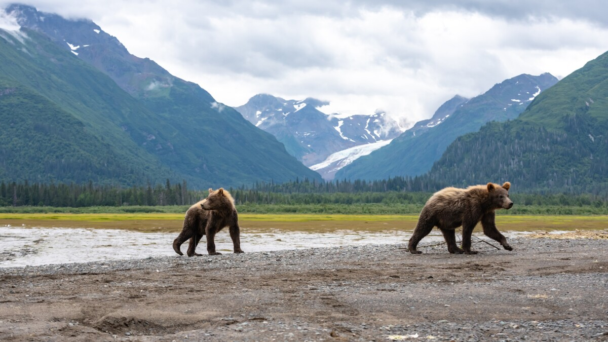 Trump administration set to sell leases this year for drilling in Arctic National Wildlife Refuge