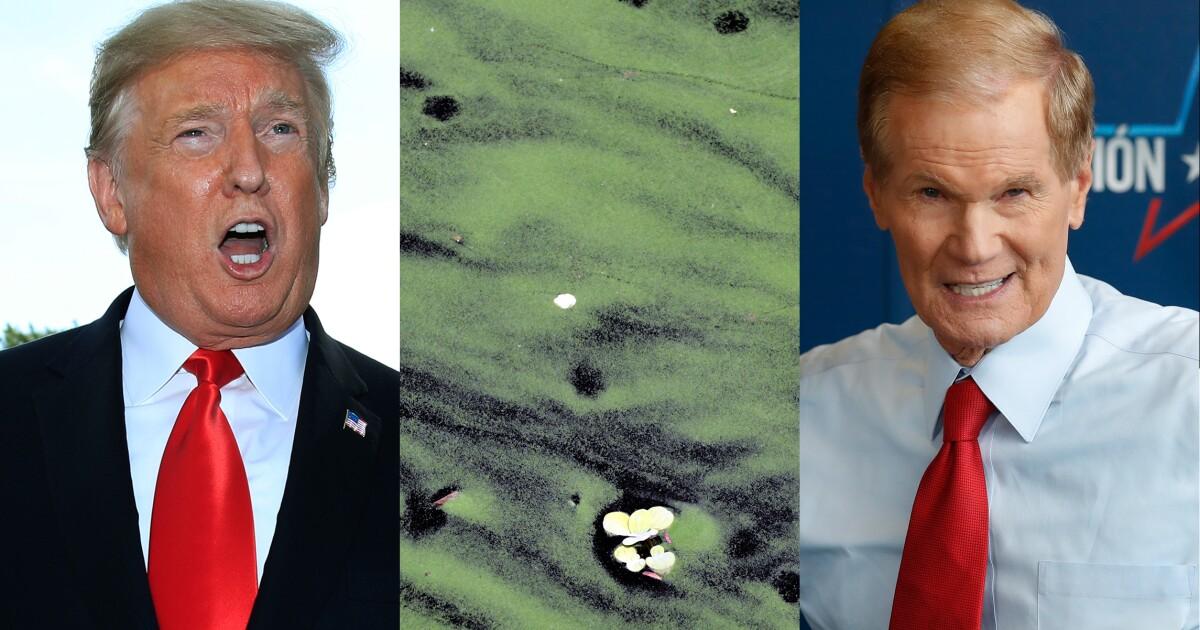 Trump blames Bill Nelson's inaction for algae in Florida