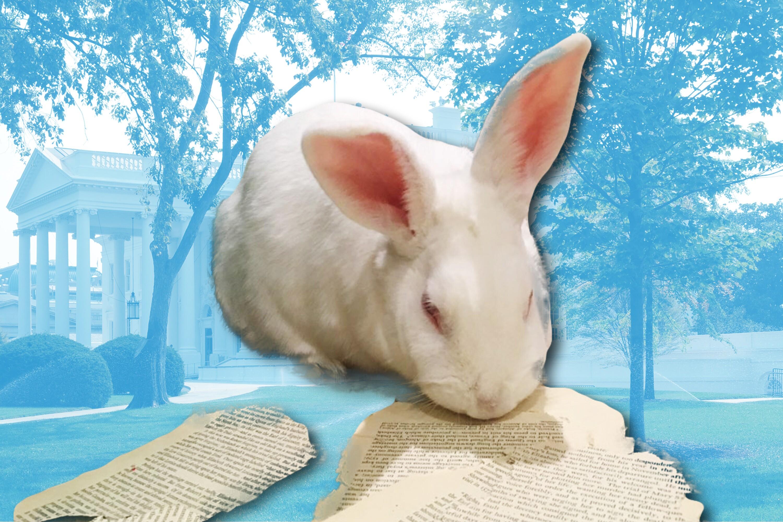 71a61f18ee2fbd Ten Bunny Tales Better Than Either Marlon Bundo Offering