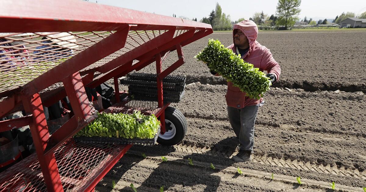 E. coli illnesses from contaminated lettuce spread to 32 states