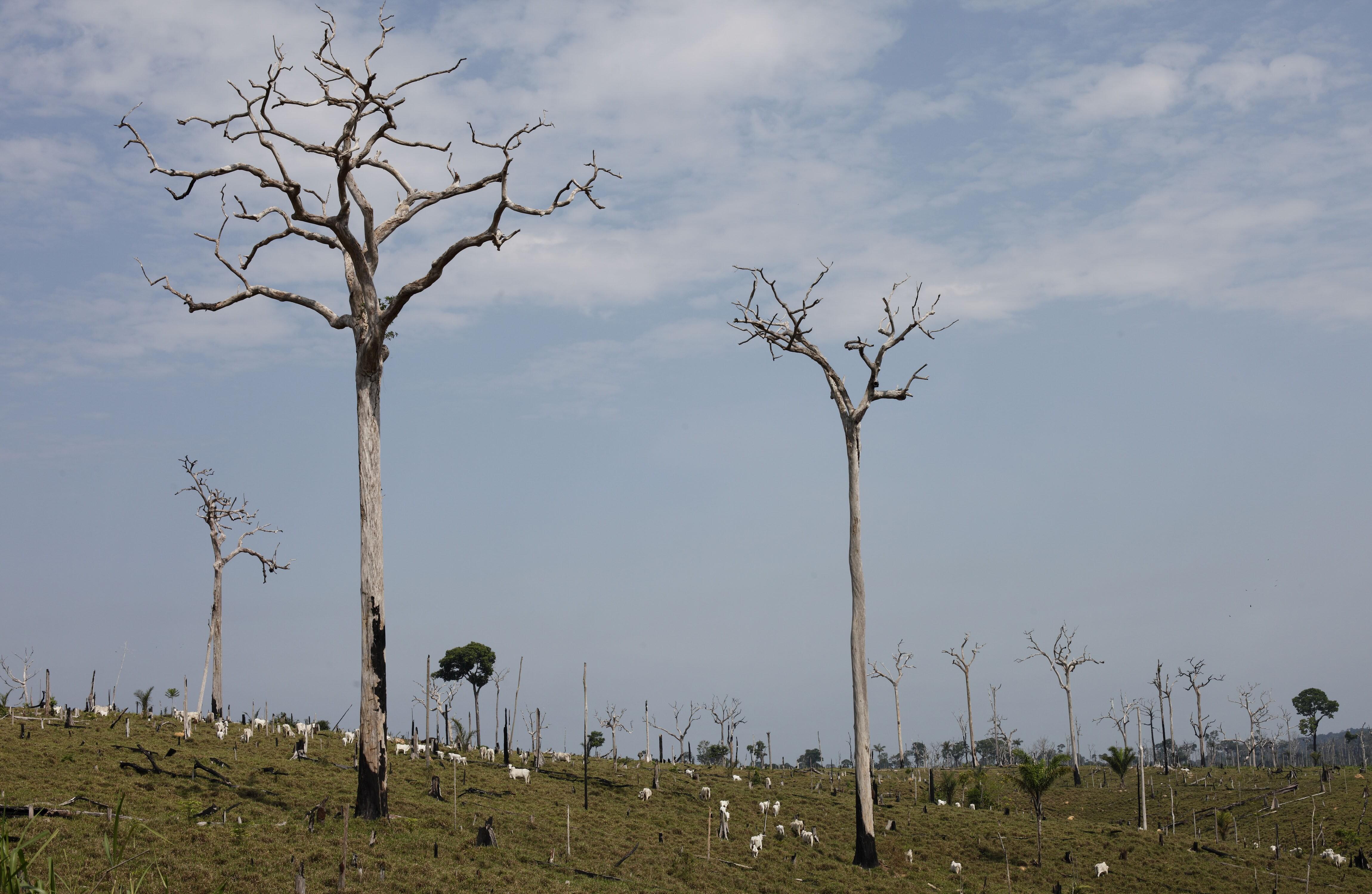 Trump pledges to help plant 1 trillion trees