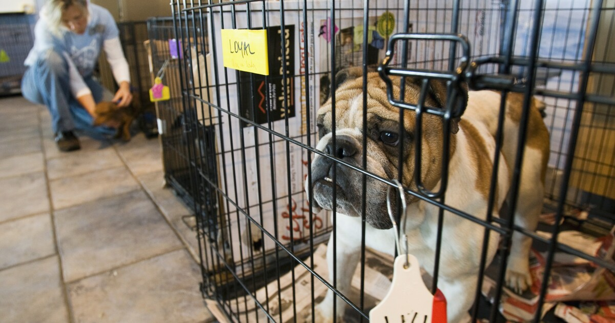 USDA must do more to crack down on abusive puppy mills