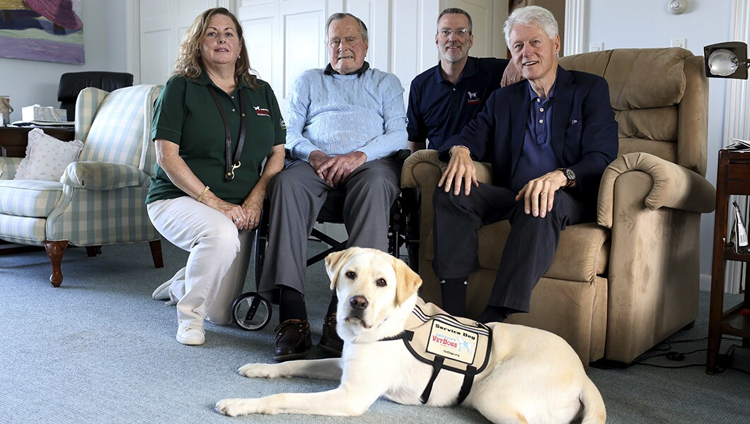 Image result for Sully the service dog