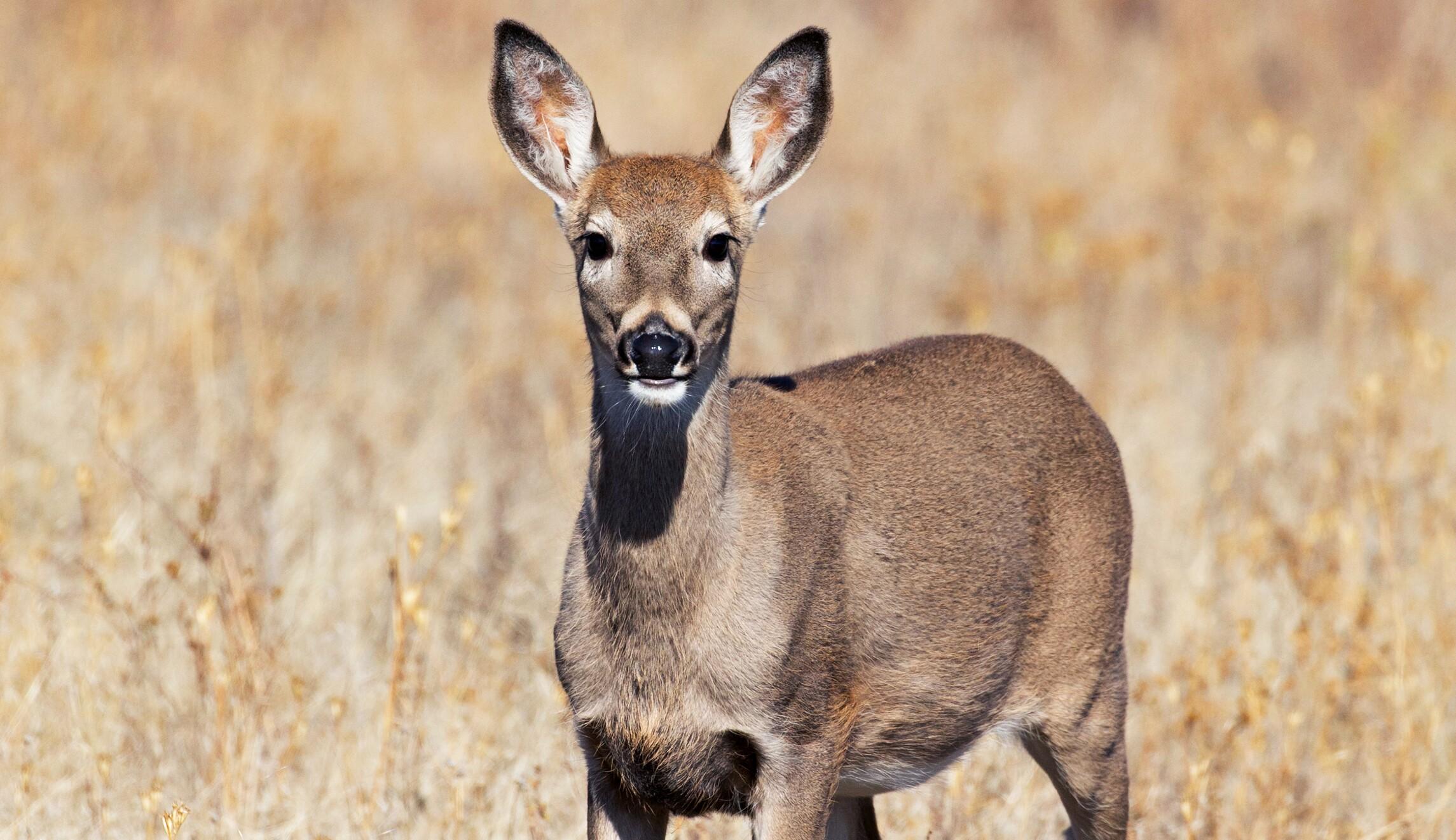 Oh, deer.