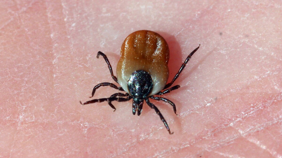 House wants to investigate if US experimented with weaponized ticks