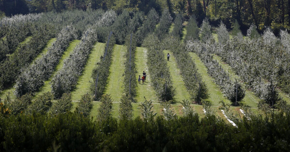 Benefits Of Organic Foods Over