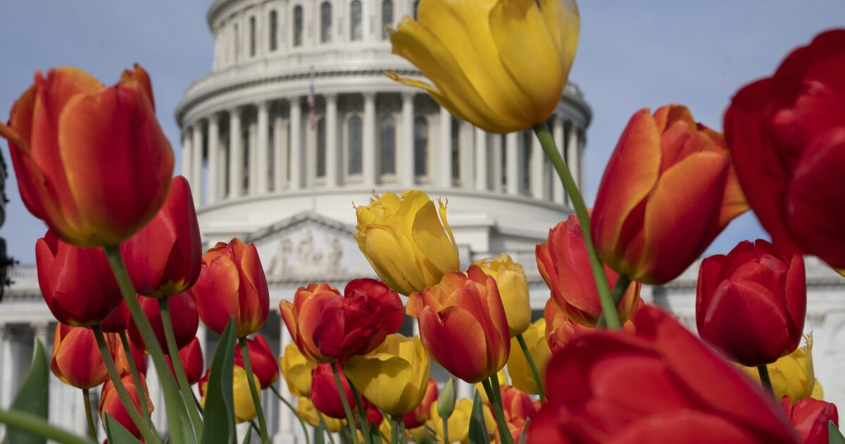 Cut Flowers Caucus blooms on Capitol Hill